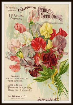 """Beautiful art print Vintage Seed Pack Image Wall Decor Unframed Print is Unframed 8.5 x 11"""" Ready for framing . Professionally printed on medium weight cardstock"""