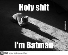 Batman Or Catwoman? this is so funny Funny Shit, Funny Cute, The Funny, Hilarious Jokes, Silly Memes, I Love Cats, Crazy Cats, Hate Cats, Silly Cats