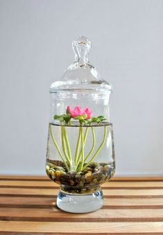 Water Terrarium. Indoor plants and cactus. An assortment of different house plants and foliage. Green rooms and rooms with plants. - DIY Fairy Gardens