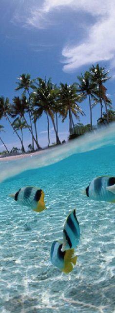 LOOKandLOVEwithLOLO: Trip to JUMEIRAH DHEVANAFUSHI in The Maldives