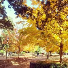 Walkway near the #UofSC Horsehoe and McKissick Museum. Photo by aishahaynes: http://instagram.com/p/g3cUBWqPMH/