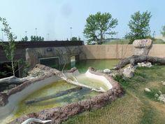 North American River Otter Exhibit-abbotsford, BC, Canada