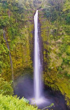 KONA, HAWAII - Local Guide  WHO: Akaka Falls State Park WHAT: If looking to forgo the logistics and navigational schematics of planning a full-blown camping excursion, venture out for the day to Akaka Falls State Park....