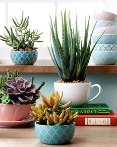 You will love these Teacup Succulent Garden Ideas and we have a video tutorial to show you how. Check out all the cute ideas now.