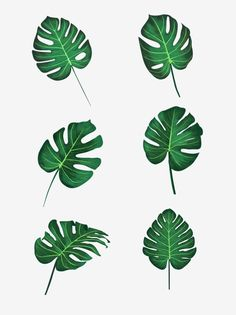 Monstera Deliciosa, Plante Monstera, Aesthetic Painting, Aesthetic Drawing, Trees To Plant, Plant Leaves, Painted Leaves, Hand Painted, Bestie Tattoo