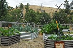 Woodside - eclectic - landscape - adelaide - by Luci.D Interiors Will build my raised beds out of metal, similar to these