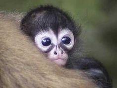 Baby Monkeyyyyy