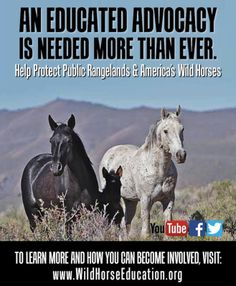 The Bureau of Land Management (BLM) has signed contracts for helicopter removals of wild horses and burros. In October of 2014 BLM extended current contracts in lieu of new contracts. This occurred...