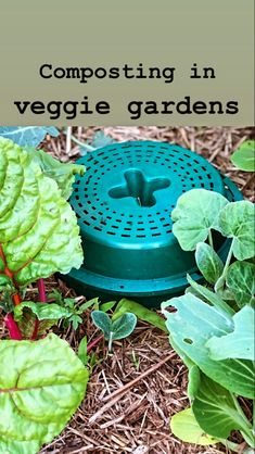 Reduce your waste and naturally fertilise your veggie garden bu composting with a Go Eco Compost Bucket 🌱 Compost Bucket, Eco Store, Organic Soil, Composting, Food Waste, Vegetable Garden, Seeds, Veggies