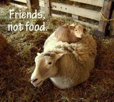 animals off the menu, go #vegan, live and let live.