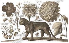 Leopard i kwiaty clip art rocznika cyfrowe Pobierz ilustracja Decoupage, Moose Art, Clip Art, World, Animals, Vintage, Animales, Animaux, Animal