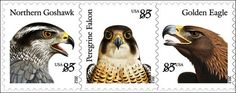 birds ofprey USA