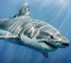 Related image Alarm System, Shark, Animals, Image, Animaux, Sharks, Animal, Animales, Animais