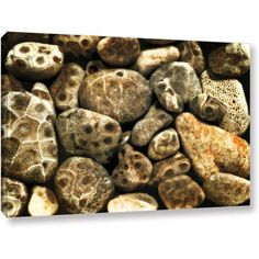 ArtWall Kevin Calkins Petoskey Stone Collage Gallery-Wrapped Canvas, Size: 16 x 24, Black