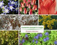 Каждый день в саду что-то меняется, все новые растения зацветают поздней весной на участке, и гамма красок пополняется яркими сочными оттенками.