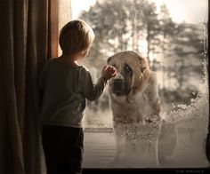 Elena Shumilova's magical, wintry photography: Dog in window - and I want this dog!!!