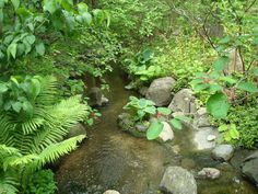 Anderson Japanese Gardens stream bed embellished with ferns and hosta