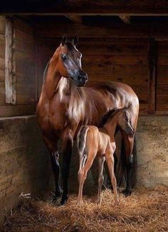 Mommy Horse with a Baby Looks So Adorable Please Follow: +Nature Photobook