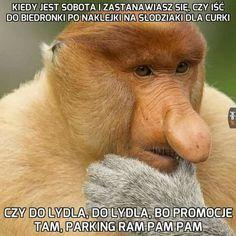 - Funny Monkeys - Funny Monkeys meme - - The post appeared first on Gag Dad. Very Funny Memes, True Memes, Funny Quotes, Funny Humor, Audi A4 B8 Avant, Funny Lyrics, Polish Memes, Pam Pam, Dumb Jokes