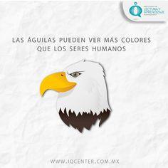 No todos los animales ven a blanco y negro. El águila tiene la mejor vista a nivel mundial, conoce más datos curiosos en nuestro Blog