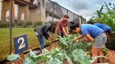 Cornell Cooperative Extension sows seeds to grow urban agriculture in NYC New York Teams, Tomato Trellis, Agricultural Practices, Urban Farmer, Urban Agriculture, Urban Setting, Organic Farming, Growing Vegetables, Shopping Hacks