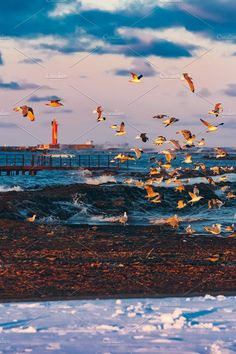 Birds over the sea Photos Flying seagulls over the winter sea in Riga by New SIGHT Photography World Photography, Creative Photography, Sea Photo, Business Illustration, Watercolor Cards, Business Card Logo, Nature Photos, Painting & Drawing, Beautiful Flowers