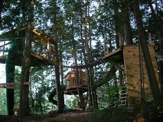 Tree house! Need something cool for the boys! maybe girls...
