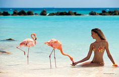 Barbara Fialho wearing a floral red and yellow bikini Beach Fun, Beach Trip, Oranjestad Aruba, Share Pictures, Brazilian Supermodel, Animated Gifs, Flamingo Beach, Beach Place, Yellow Bikini