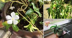 Aprende a reconocer cuándo las plantas sufren falta o exceso de luz.