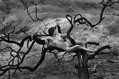 Desert Tree Nude