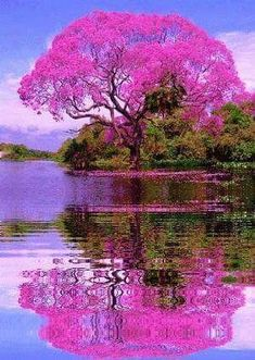"""Beautiful tree in Brazil🌳… "" Beautiful Nature Wallpaper, Beautiful Landscapes, Beautiful Images, Beautiful Scenery, Beautiful Nature Photography, Beautiful Paintings Of Nature, Beautiful Landscape Pictures, Natur Wallpaper, Science And Nature"