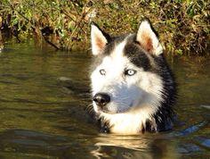 Apollo swimming