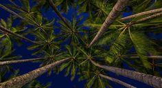 Palm Cove Photo @yseanscottphotography www.parkmyvan.com.au #ParkMyVan #Australia #Travel #RoadTrip #Backpacking #VanHire #CaravanHire
