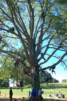 tree climbing is a sport... awesome.