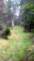 I love to walk in forest. Copyright PeeKoo. http://naistenpaivankunniaksi.blogspot.com