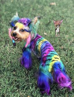 Rough Collie, Sheltie, Dog Grooming, Yorkie, Rainbow, Colorful, Dogs, Design, Art