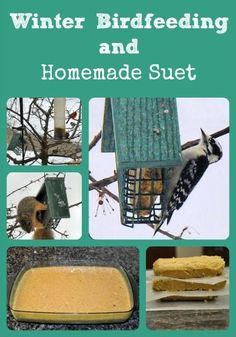 bird feeding suet recipes - Describes which to use for feeding wild birds to attract specific varieties and provides an easy homemade suet recipe - via Better Hens and Gardens Bird Suet, Diy Bird Feeder, Suet For Birds, Homemade Suet Recipe, Feeding Birds In Winter, Suet Cakes, Homemade Bird Houses, Bird House Kits, Bird Aviary