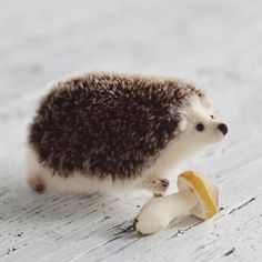 Little cute hedgehog with mushroom available for adoption))🌿 ***This hedgehog made from high-quality mohair yarn and German hedgehog-mohair.*** Details in my store on Etsy *link in bio* #hedgehogs #hedgehoglove #hedgehoglover