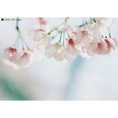 【brave_vibration】さんのInstagramをピンしています。 《連休もあと一日だけ * * #ishootfilm * * * #film * * * * * * #cherryblossom#flowermagic#flowerlovers#flowerstagram#flowerporn#floweroftheday#filmcamera#filmphoto#filmphotography#ilovefilm#filmisnotdead#filmcommunity * #エビプリ#ザ花部#桜#はなまっぷ#フィルム#フィルムカメラ#フィルム部#フィルム写真#フィルム写真普及委員会#フィルムに恋してる#フォトサプリ#写真好きな人と繋がりたい#ファインダー越しの私の世界 * #胶片》