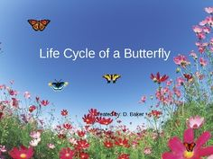 This animated and colorful PowerPoint will illustrate for your students the life cycle of a butterfly as it morphs form egg to caterpillar and cate...