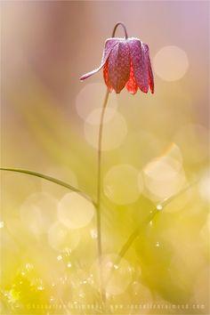 Happy flower.