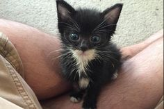"""""""Gave my whole paycheck to animal hospital to save this guy. Worth it!"""""""
