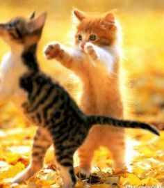 Cute Cats In Marshmallows Cute Kittens Live Cute Funny Animals, Cute Baby Animals, Funny Cute, Kids Animals, Cute Animal Pictures, Funny Pictures, Adorable Pictures, Animal Pics, Random Pictures