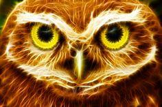 owl fractal