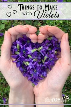 Here are a dozen pretty and practical ways to use foraged violet flowers and leaves. Edible Plants, Edible Flowers, Edible Garden, Natural Home Remedies, Herbal Remedies, Violet Plant, Sweet Violets, Flower Food, Wild Edibles