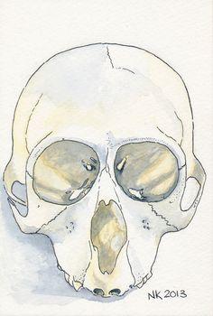 Schedel van een aapje, Oost-Indische inkt en waterverf, 2013. Monkey skull, Ink and watercolour, 2013.