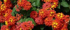 Flores de verano más resistentes al calor