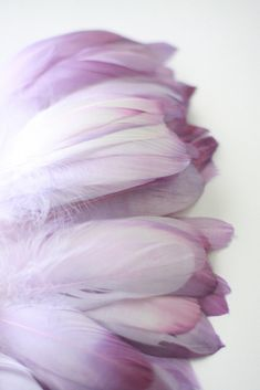 Mauve feathers, because they are fabulous!