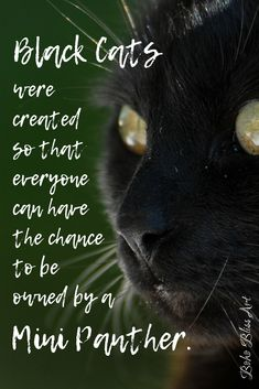 Black cats were created so that everyone can have the chance to be owned by a mini panther. Black Cats: In Praise of the Mini Panther. Crazy Cat Lady, Crazy Cats, I Love Cats, Cool Cats, Black Cat Quotes, Cats Tumblr, Cat Hacks, Cat Care Tips, Cat People