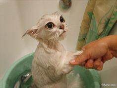 El Pobre Gatico Recién Bañado!!! :3